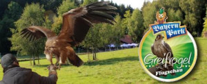 Greifvogel Flugschau im Bayern Park