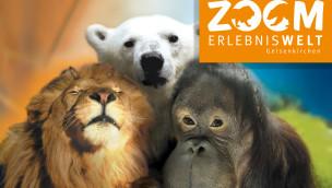 """Zoom Erlebniswelt – Giraffenbaby im Bereich """"Afrika"""" geboren"""