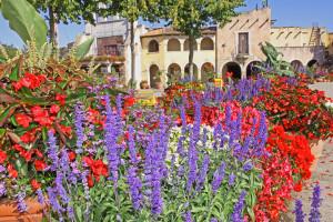 Blumenpracht beim Sommerblütenfestival im Hansa-Park: ab 1. Juli darf die Gartenschau erlebt werden!