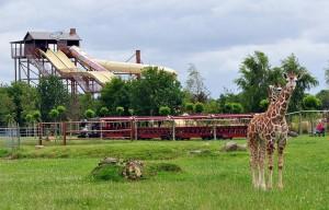 """Blick auf """"Rocky Rafting"""" im Jaderpark vom Giraffengehege aus"""