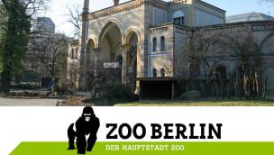 Zoo Berlin – Nachwuchs bei den Soldatenkiebitzen