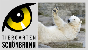 Tiergarten Schönbrunn feiert Elefanten-Nachwuchs