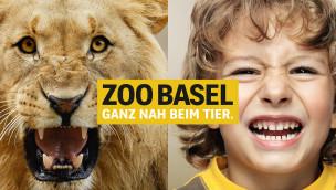 Zoo Basel – Somali Wildesel Nachwuchs im schweizer Zoo