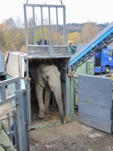 Elefantentransport Zoo Basel