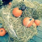legoland_halloween2013_2