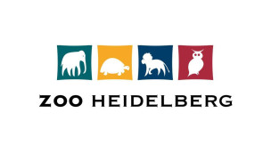 Lebhafte Madagaskar-Wohngemeinschaft im Zoo Heidelberg