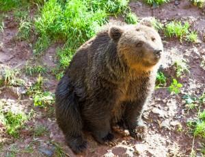 Eifelpark Bär