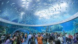 Chimelong Aquarium