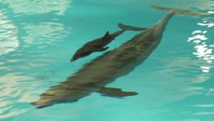 Delfin-Baby in Nürnberg