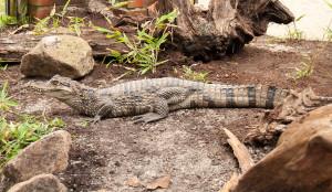 Jaderpark Krokodil