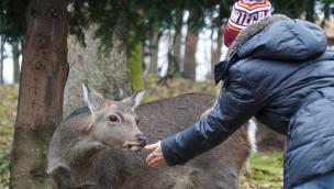 Wildparadies Tripsdrill im Winter jetzt täglich geöffnet: Das wird geboten!