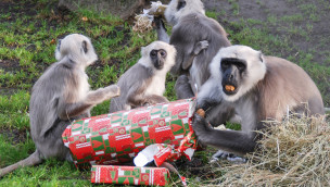 Weihnachten im Jaderpark: Geschenkpakete für Tiere