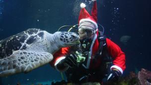 SEA LIFE und LEGOLAND Oberhausen bis 27. Dezember 2016 mit Weihnachtsatmosphäre