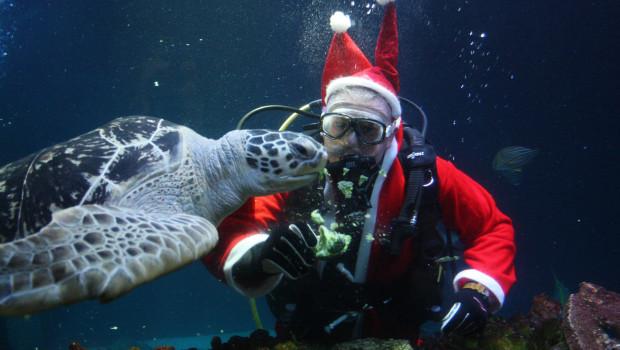 Weihnachtsmann Unterwasser im SEA LIFE Oberhausen