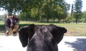 Europa-Park Fotomontage - Hund