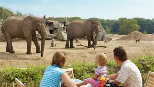Ferienpark Beekse Bergen - Tiere hautnah