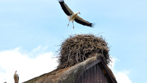 Störche im Weltvogelpark Walsrode