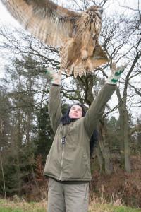 Freilassung des Uhu im WIldpark Lüneburger Heide