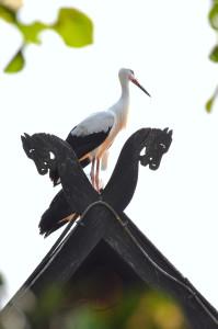 Weißstorch im Weltvogelpark Walsrode