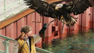 Adler in der Robbenshow des Erlebnis-Zoo Hannover