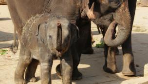 Generalstaatsanwaltschaft weist  Beschwerden von Peta zurück: Keine Tierquälerei im Zoo Hannover