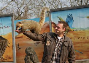 Nasenbär-Show im Erlebnis-Zoo Hannover