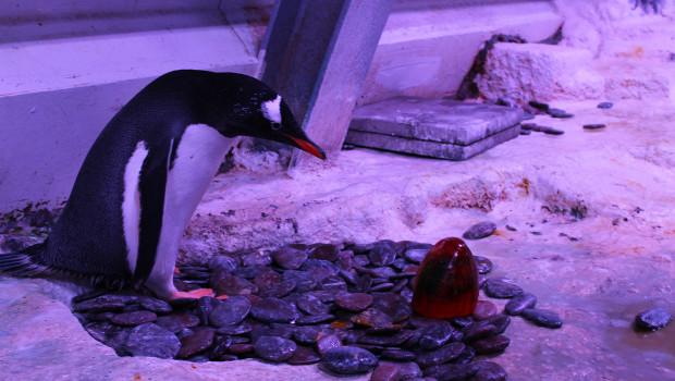 Ostereiersuche der Eselspinguine im SEA LIFE Oberhausen