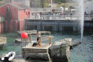 Robbenshow im Erlebnis-Zoo Hannover