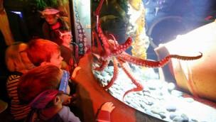 """SEA LIFE Königswinter – """"Herren der Tinte"""" bringen Farbe ins Großaquarium"""
