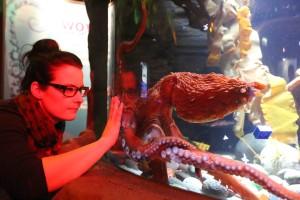 SEA LIFE Königswinter - Oktopus Höhle