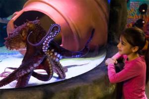 Oktopus im SEA LIFE Oberhausen