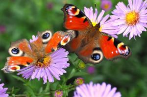 Schmetterlinge Weltvogelpark Walsrode