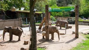 Elefanten im Zoo Karlsruhe
