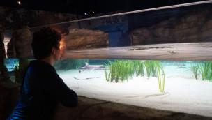 Deutschlands größte Hai-Aufzuchtstation im SEA LIFE Oberhausen eröffnet