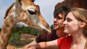 Giraffen in der ZOOM Erlebniswelt