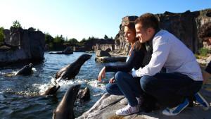 Seelöwen in der ZOOM Erlebniswelt