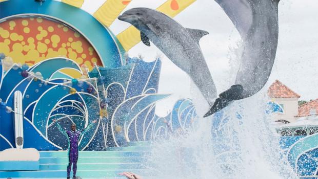Dolphin Days Show im SeaWorld San Diego