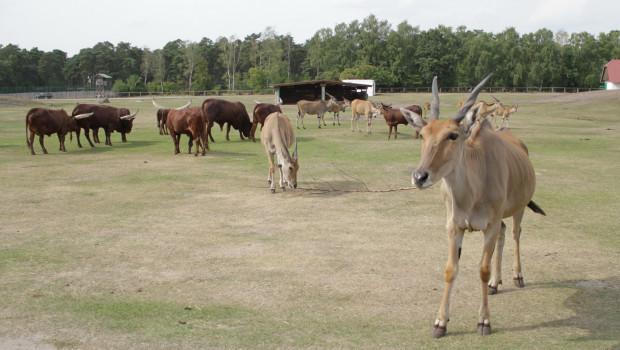 Steppe im Zoo Safaripark Stukenbrock