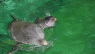 """Delfin-Baby im Duisburger Zoo ist tot: Nachwuchs von """"Pepina"""" lebte nur eine Woche"""