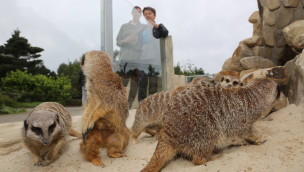 Tier- und Freizeitpark Thüle eröffnet neues Erdmännchen-Gehege