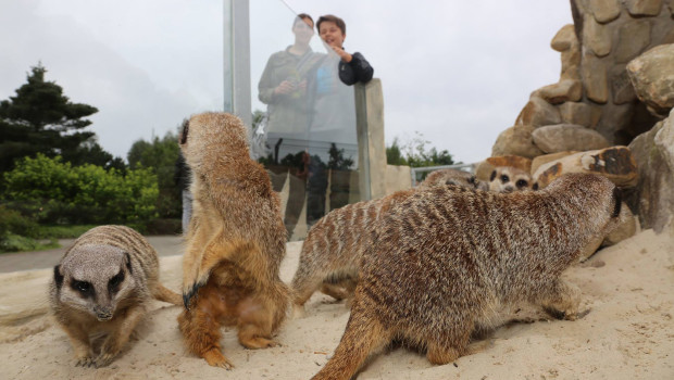 Erdmaennchen-Anlage im Tier- und Freizeitpark Thüle