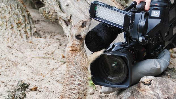 Jaderpark bei der 7. Staffel von Seehund Puma & Co.