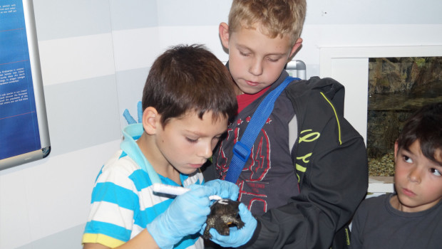 Junge Umweltschützer im SEA LIFE Oberhausen - Schildkröten-Markierung