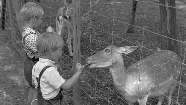 Tierpark Oberwald nostalgisch
