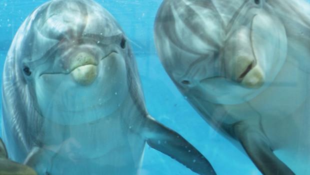 Delfine in Särkänniemi