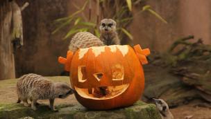 Erlebnis-Zoo Hannover feiert Halloween 2015 eine Woche lang mit Mitmach-Aktionen