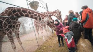 Jaderpark im Winter 2015: Tier- und Freizeitpark Jaderberg eröffnet Wintersaison am 2. November