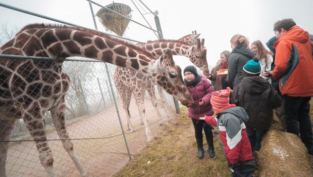 Jaderpark - Giraffen im Winter