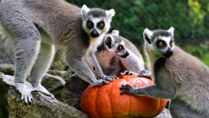 Serengeti-Park-Rabatt 2015 mit Kürbis: Am 24./25. Oktober Kürbis abgeben und 50% sparen!