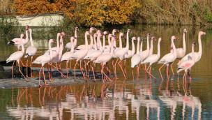 ZOOM Erlebniswelt – Pelikane und Flamingos beziehen warmes Quartier für Winter 2015/16